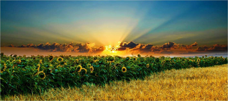 Сунцокрет